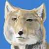 仮想通貨オオカミ